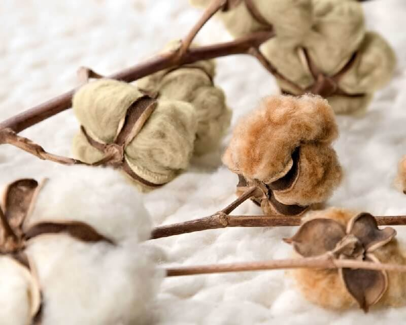 Natural Colour Cotton. What exactly is it?