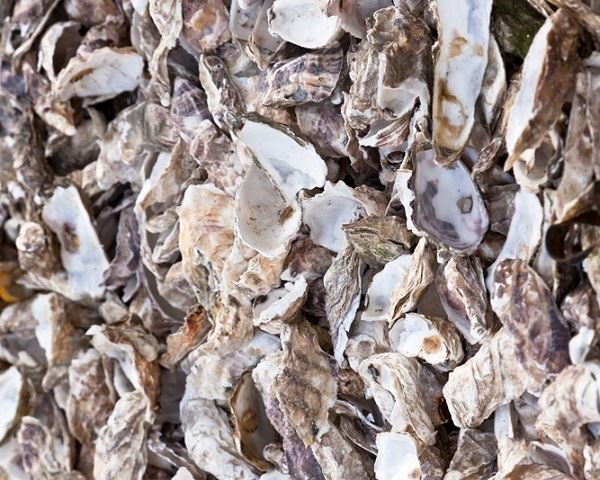 How to Recycle Oyster Shells