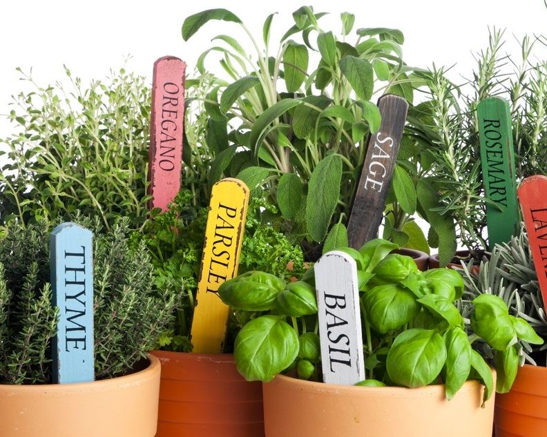 Herbs for a Window Sill Garden