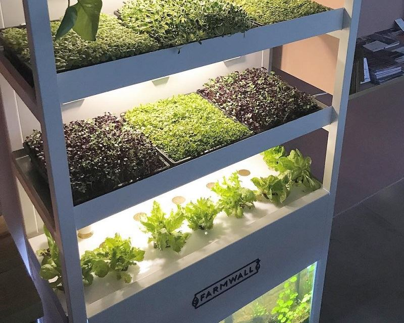 Farmwall Now Grows Fresh Greens at Your Office